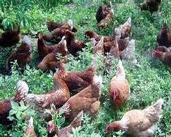 包头市新创业养殖基地有限责任公司
